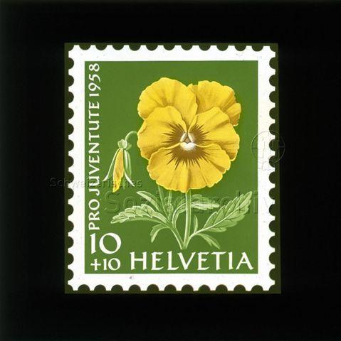 """Diaserie Briefmarken; """"Helvetia 10 +10, Pro Juventute 1958""""; Blume """"Gelbes Stiefmütterchen""""; 1958"""