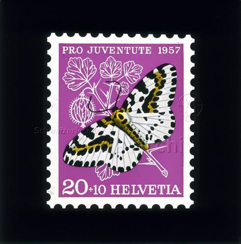 """Diaserie Briefmarken; """"Helvetia 20 +10, Pro Juventute 1957""""; Schmetterling """"Stachelbeerspanner""""; im Hintergrund Frucht und Blätter von Stachelbeere; 1958"""