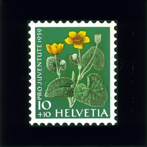 "Diaserie Briefmarken; ""Helvetia 10 +10, Pro Juventute 1959""; Sumpfdotterblume; 1959"